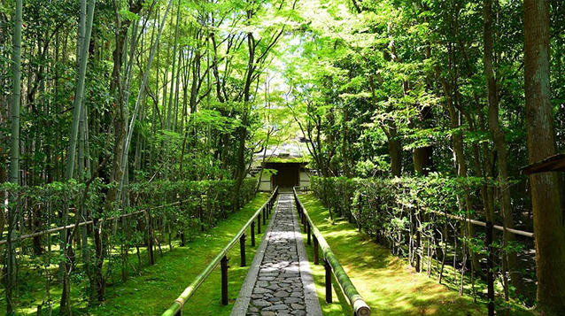 Pico Iyer's Kyoto, by Mark Wexler